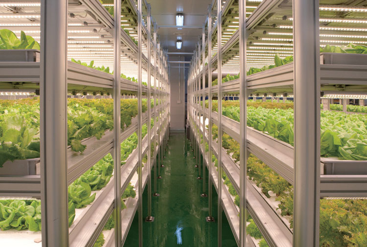Indoor Vertical Farm & LED Growing Light