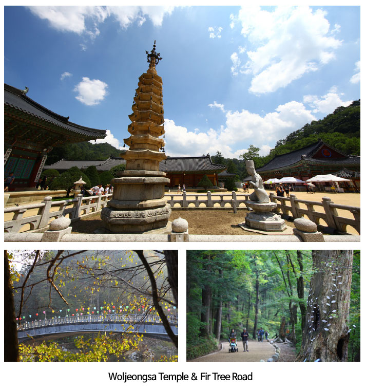 Temple within a forest of fir trees, Woljeongsa Temple